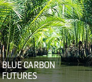 Blue Carbon Futures