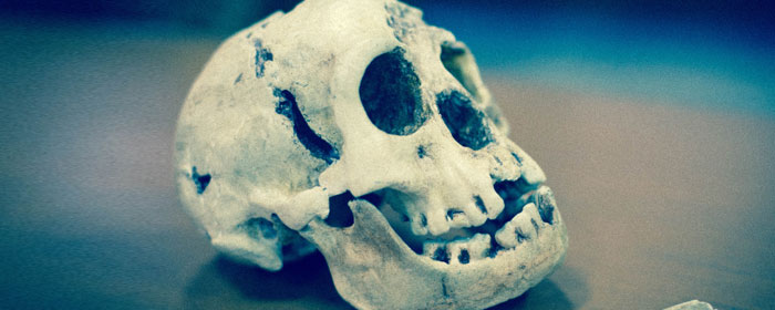 Homo Floresiensis Uncovered: The Science of the Hobbit