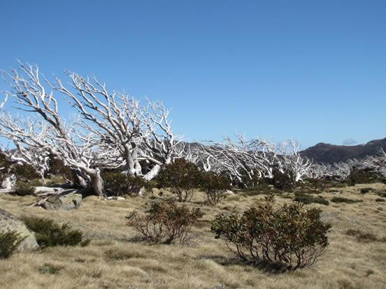 WIGL Dead Trees