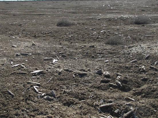 WIGL Gypsum Field