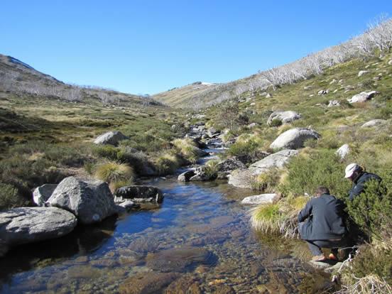 WIGL Guthega Creek
